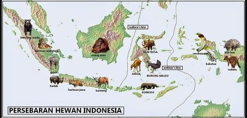 Gambar Peta Indonesia Persebaran Flora Dan Fauna A Photo
