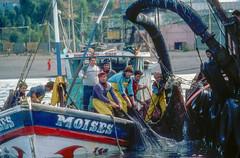 Fishermen, Coronel, Chile,1986 (Marcelo  Montecino) Tags: fishermen coronel chile 1986