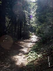 732 Camí de la Ribera - 02 (e_velo (εωγ)) Tags: 2018 catalunya cerdanya summer estiu verano forest bosques boscos trees árboles arbres