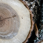 Close Up on a Pile of Logs thumbnail