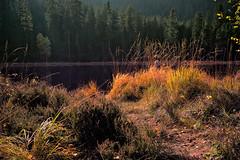 Herbst am Huzenbacher See (MHikeBike) Tags: wald berge wasser bäume nationalpark schwarzwald nordschwarzwald murg murgtal baiersbronn huzenbach schönmünzach wandern wege ruhe berg radweg fahrrad weg