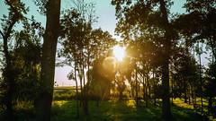 03.08.2018 (Fregoli Cotard) Tags: 214365 214of365 light lightchaser sunsetlight sunset road roadtrip travel traveling yeahshetravels everydayphoto dailyjournal dailyphotography dailyproject dailyphoto dailyphotograph dailychallenge everyday everydayphotography everydayjournal aphotoeveryday 365everyday 365daily 365 365dailyproject 365dailyphoto 365dailyphotography 365project 365photoproject 365photography 365photos 365photochallenge 365challenge photodiary photojournal photographicaljournal visualjournal visualdiary