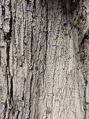 Bark Texture (earthdog) Tags: 2018 wood texture bark tree line googlepixel pixel androidapp moblog cameraphone
