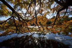 Sheffield Park Gardens (Splat Photo) Tags: sheffield park gardens sussex national trust sony a7iii a7m3 trees lake water starburst sel1224g 1224 1224f4 f4 ultrawide ultra wide angle 12mm