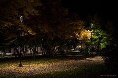 Autumn park (MIKAEL82KARLSSON) Tags: gränna night natt nightshot nightphoto nattfoto småland jönköping polkagris sverige sweden vättern street park sony a7ll samyang 50mm mikael82karlsson