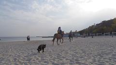 (TheDeepestPurple+) Tags: 2018 pentax pentaxart q7 515mm smcpentaxf2845515mmedalif odessa outdoor autumn blacksea sea beach people dog horse