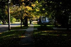 Color and Corn (joeldinda) Tags: canon powershotg9xii g9x 2018 michigan mulliken village tree sidewalk walk lawn fallcolor fields corn maize house flag street 4259 october
