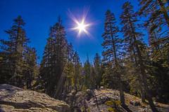 BareIslandLakeTrees6Sept1-18 (divindk) Tags: bareislandlake california maderacounty sierranationalforest backpacking camping hiking lake quiet reflection serene sunrays sunshine treetop trees