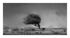 Resilient (Nick green2012) Tags: infrared 21 tree minimal landscape blackandwhite silence
