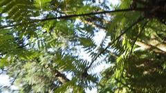 PA010549 (earth_cixing) Tags: 慈心華德福 大地班 2018 5b 校外教學 福山植物園 植物主課