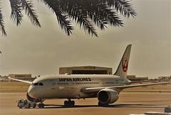 JAL 787-8 JA840J (kenjet) Tags: hnl phnl honoluluinternationalairport danielkinouyeinternationalairport ramp hawaii oahu jl jal japan japanairlines plane jet flugzeug airliner airline aviation boeing 787 788 7878 ja840j dreamliner