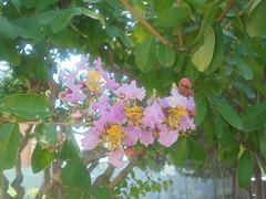 103 (en-ri) Tags: fiori flowers rosa verde foglie leaves sony sonysti alberello