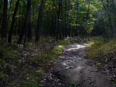 Lenape Trail (Dendroica cerulea) Tags: trail tree trees forest landscape autumn eaglerockreservation essexcounty nj newjersey