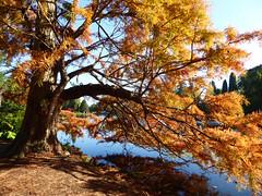 Across Ten Foot Pond (Gilder Kate) Tags: autumncolour autumn october sheffieldpark sheffieldparkandgarden tenfootpond firstbridge eastsussex nationaltrust nationaltrustproperty autumnal panasoniclumixdmctz70 panasoniclumix panasonic lumix dmctz70 tz70