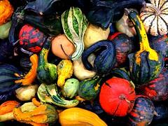pumpkins in autumn colors | Czech Republic (maryduniants) Tags: vividcolors autumncolors food czechrepublic october fall colors autumn pumpkin