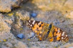 Butterfly (Ewelina Jaminska) Tags: butterfly fly park guell barcelona spain travel beauty beautiful
