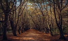 Nature reserve De Manteling (titidylan) Tags: bois woods zeelande hollande paysbas forest