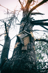 birdhouse (annapolis_rose) Tags: birdhouse tree reifelbirdsanctuary ladner delta greatervancouver