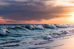 Fish In The Surf - How Many  Can You Count? (John Piekos) Tags: waves fishing d750 2470mm sunset marthasvineyard nikon fish surfcasters surf ocean edgartown southbeach marthasvineyardstripedbassandbluefishderby shore