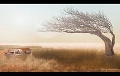 The Last Forever (Eminy Roddenham) Tags: secondlife sl desert exploration slexploration landscapes texas lastforever marfa tumbleweeds