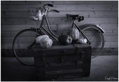 Laity Pumpkin Patch - Pitt Meadows (Explored) (SonjaPetersonPh♡tography) Tags: pittmeadows bc britishcolumbia canada nikon nikond5300 pumpkins pumpkinpatch fall autumn autumncolours fields animals hayrides laitypumpkinpatch barns displays food rides pettingzoo tractorrides