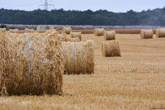 Alpacas (@El_Camionero) Tags: pacas alpacas campo trigo siembra profundidad