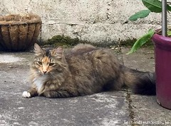 [Reunited] Sat, Sep 22nd, 2018 Lost Female Cat - Eugene Street, Dolphins Barn, Dublin (Lost and Found Pets Ireland) Tags: lostcateugenestreetdublin lost cat eugene street dublin september 2018