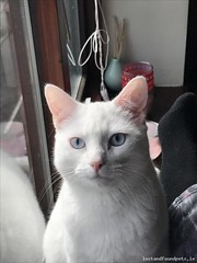Wed, Aug 22nd, 2018 Lost Male Cat - Cáislean Rí, Athenry, Galway (Lost and Found Pets Ireland) Tags: lostcatcáisleanrígalway lost cat cáislean rí galway august 2018