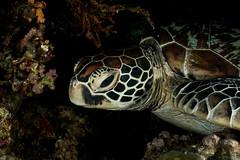 IMG_7196 (Gil Xavier) Tags: underwater scuba philippines canon fantasea g7xmk2 cebu moalbal turtlebay
