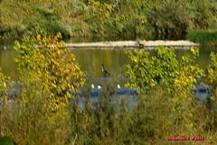 Le bras mort du Rhône à Serrières, Ardeche 21 (voyageursdumonde1) Tags: eau nature village france2018 isère paysages ardeche fleuve