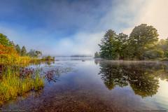 Morning Mist at Echo Lake (Greg from Maine) Tags: maine lake landscape vegetation plants echolake pufferspond dexter dextermaine mainehighlands fog morningmist morning reflection trees penobscotcounty lilypad shore grass mist