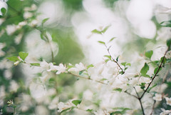 (Kkeina) Tags: film analog manual om1 lomography lomo blur japan soft green flowers trees