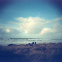 (a walk across the rooftops) Tags: film analog analogue 120 medium format nw oregon coast sea bird ektachrome exploregon holga ethereal ocean kodak 100