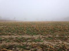 Sommerende ([klauspeter]) Tags: september mist corn mais maisfeld morning scheesel 2018 herbst fog nebel ernte harvest autumn maize