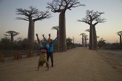 181002 Sunrise at Avenue of the Baobabs (BY Chu) Tags: madagascar morondava avenueofthebaobabs adansonia baobab sunrise