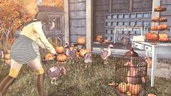 #155 LiZu's barnyard Halloween (lizumelody) Tags: serenitystyle disorderly fabia reign neve sl secondlife shinyshabby liaison collaborative tres chic
