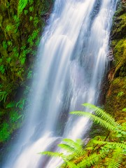 Deserter Falls and Ferns (Matthew James Lewis) Tags: olympicpeninsula olympicnationalforest washingtonstate water desertercreekfalls ferns longexposure light landscape bigquilvalley nature northwest