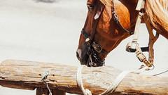 Actor secundario (SantiMB.Photos) Tags: 2blog 2tumblr 2ig desierto tabernas caballo horse andalucia españa esp