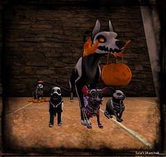 Skelli crew ready to trick or treat  - 2 (EclairMartinek) Tags: secondlife sl halloween pacifique eclairmartinek jian hellhund