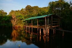 Река Якума (Oleg Nomad) Tags: боливия река якума лес облака вода bolivia river yacuma sky clouds nature america travel