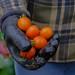 Stu & Tomatoes