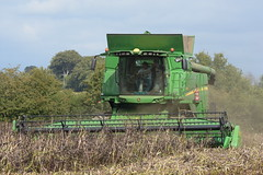 John Deere T660 I Hill Master Combine Harvester cutting Winter Beans (Shane Casey CK25) Tags: john deere t660 i hill master combine harvester cutting winter beans jd green castletownroche grain harvest grain2018 grain18 harvest2018 harvest18 corn2018 corn crop tillage crops cereal cereals golden straw dust chaff county cork ireland irish farm farmer farming agri agriculture contractor field ground soil earth work working horse power horsepower hp pull pulling cut knife blade blades machine machinery collect collecting mähdrescher cosechadora moissonneusebatteuse kombajny zbożowe kombajn maaidorser mietitrebbia nikon d7200