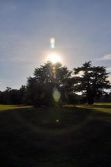Trees (Martin Pettitt) Tags: 2018 burystedmunds digitalcamera dslr hardwickheath heath nikond90 outdoor park suffolk trees uk