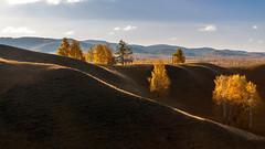Осень #maksileni, #Максименко_Леонид, #Leonid_Maksimenko, #своифото, #пейзаж, #природа, #утро, #рассвет, #дерево, #натура, #восход, #sunrise, #nature, #tree, #Landscape, #sun, #туман, #лучи, #foggy, #природа, #небо, #небоголубое, #сониальфа, #сониа6000, # (ЛеонидМаксименко) Tags: autumn осень сониа6000 maksileni leonidmaksimenko natgeoru foggy nature небо природа натура дерево etonashural sun рассвет своифото sunrise natgeorussia сониальфа пейзаж восход sonyalpha небоголубое утро sonya6000 лучи tree landscape natgeoyourshot туман максименколеонид