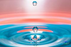 Water Drops #8 (Simone_Callegari) Tags: water waterdrops drop drops waterdrop macro macrophotography nikon nikond850 d850 105 105mm nikkor colors colori colores color acqua gocce goccia