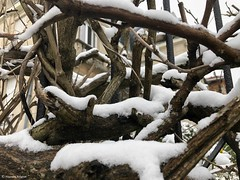 branches-neige© (alexandrarougeron) Tags: photo alexandra rougeron neige urbain paysage nature paris