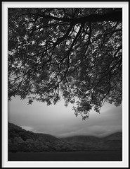 canopy (Andrew C Wallace) Tags: canopy leaves tree ir infrared blackandwhite bw microfourthirds m43 olympusomdem5 thephotontrap wilsonspromontory victoria australia