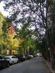 Tree-lined street (Marissa Babin) Tags: boston massachusetts beaconhill
