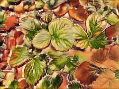 Otoñales (seguicollar) Tags: imagencreativa photomanipulación art arte artecreativo artedigital virginiaseguí hojas otoño samsung8 nervios green verde marron