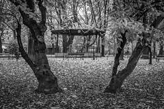 18-11__T2F3930 (Jacek P.) Tags: poland kraków planty jesień fall trees drzewa blackwhite bw monochrome liście leaves